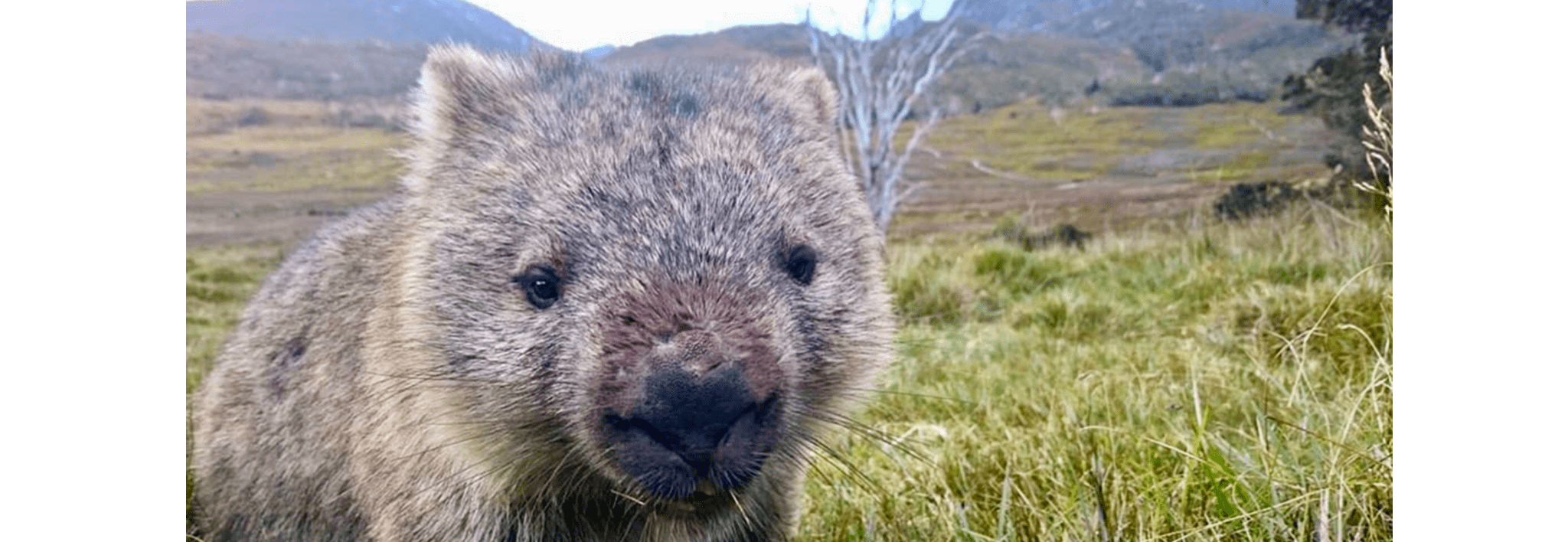 wombat at waldheim